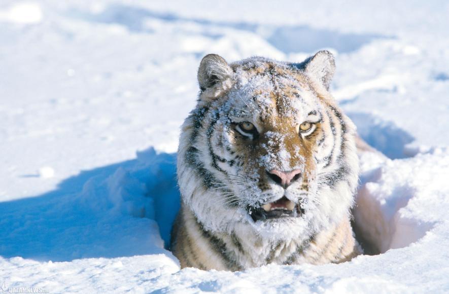 زمستان و زیست بوم جانداران / تصاویر