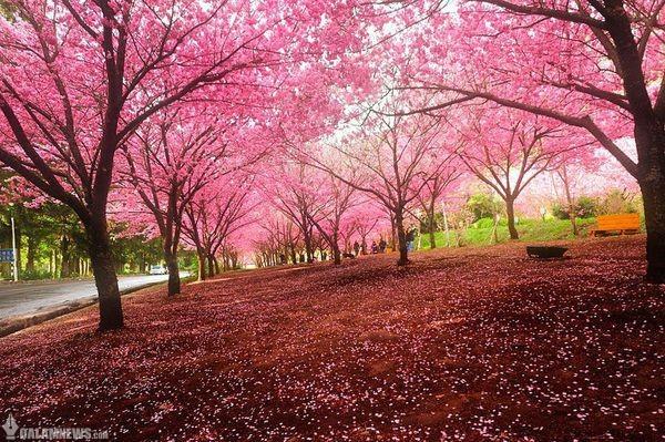 بهار دوران نوزادی عناصر تنوع زیستیست/در روز طبیعت مراقب نوزادان محیط زیست باشیم
