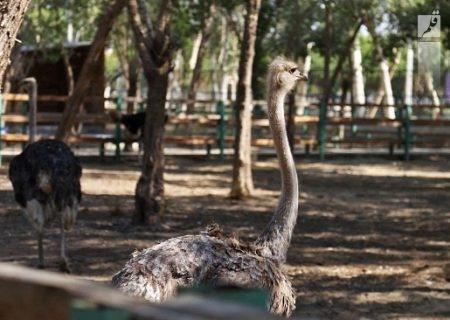 واکسیناسیون پرندگان باغ پرندگان اصفهان زمان بر است