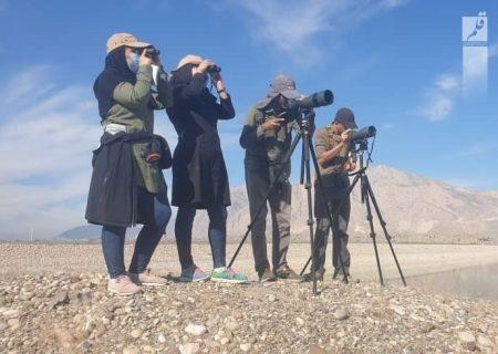سرشماری نیمه زمستانه پرندگان مهاجر آبزی و کنار آبزی در استان هرمزگان آغاز شد