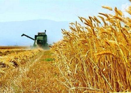 گندم تولیدی به مراکز خرید خارج از همدان تحویل داده نشود