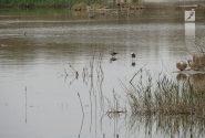 ۹۶ درصد از تالاب گاوخونی خشک شده است