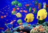 شهرک پرورش ماهیان زینتی با ظرفیت ۲۰ میلیون قطعه در قم احداث میشود