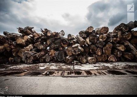 تراژدی قاچاق چوب در ایران/ تیغ تیز اره برقی بر گلوی درختان بلوط/ مافیا پروژه انقراض را کلید زدهاند