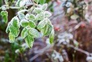 هوای فارس ۱۰ تا ۱۵ درجه سردتر میشود