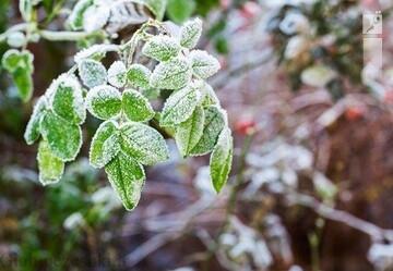 هشدار سرمازدگی به کشاورزان و باغداران استان فارس