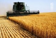 کشاورزی و صنعت از حوزههای کارآمد اقتصادی منطقه کاشان است