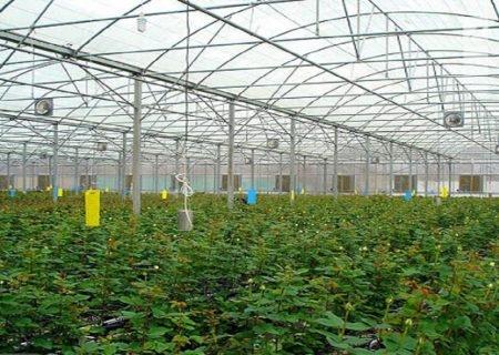 تولید سالانه ۵۷۰ هزار تن انواع محصولات گلخانهای در استان هدفگذاری شده است