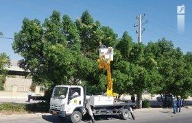 معاون توزیع برق شیراز: خودداری از کاشت درخت در حریم شبکه برق