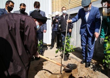 آیتالله خاتمی: اسلام توجه ویژه به توسعه فضای سبز و درختکاری دارد