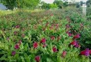 وجود ۱۶۵۰ گونه گیاهی در استان/ تغییر و تحول در اقلیم استان همدان