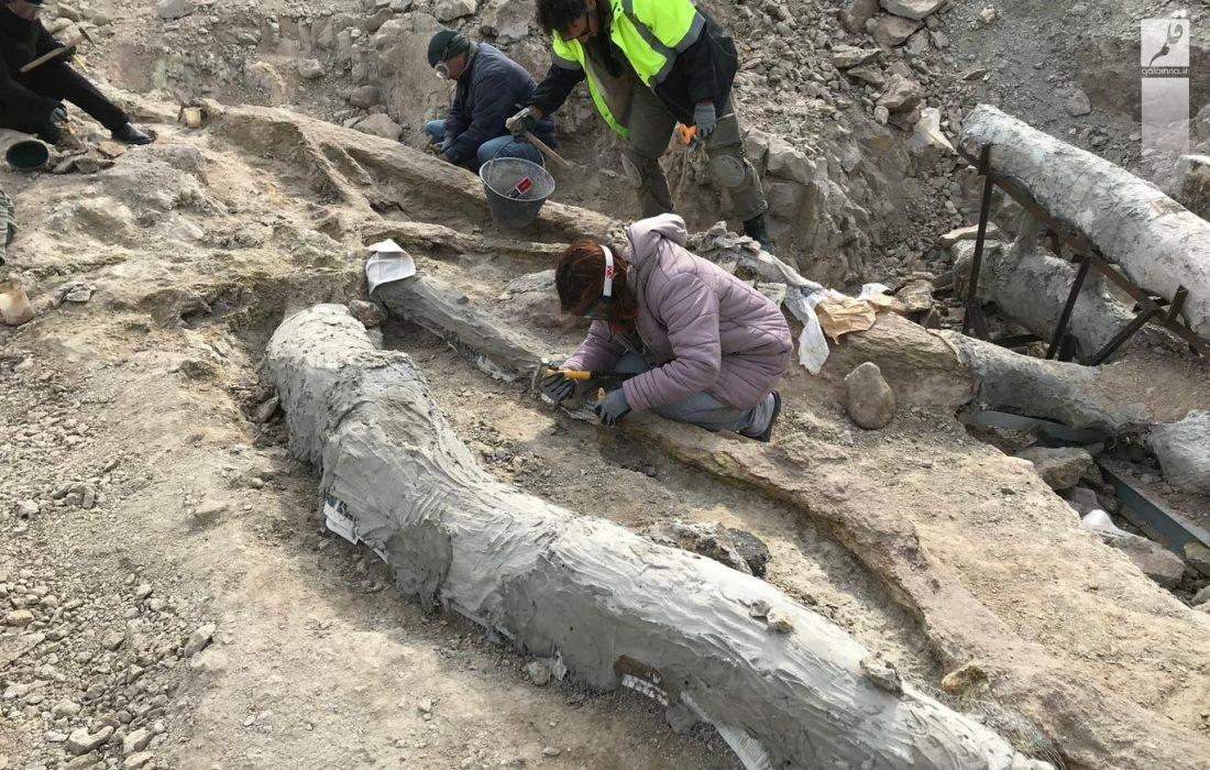 کشف فسیل درخت ۲۰میلیون ساله در یونان