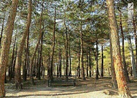 راهکار جلوگیری از قطع بی رویه درختان چیست؟