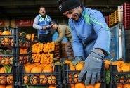میوه تنظیم بازار در ایام ماه مبارک رمضان عرضه میشود