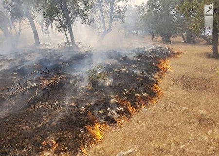 هشت هکتار از زمینهای کشاورزی دالاهو در آتش سوخت