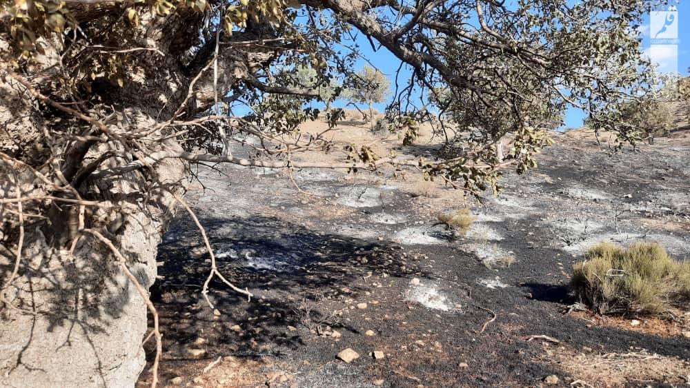 مهار آتش سوزی در ارتفاعات کوههای سپیدار خفر