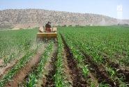 کاشت ارقام ذرت علوفهای در شهرستان داراب
