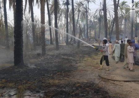 افزون بر ٢٠٠ نفر نخل خرما در بخش دامن ایرانشهر طعمه حریق شد